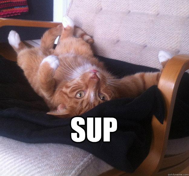 sup  Sup Cat