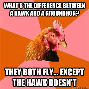 What's the difference between a hawk and a groundhog? They both fly... except the hawk doesn't - What's the difference between a hawk and a groundhog? They both fly... except the hawk doesn't  Anti-Joke Chicken
