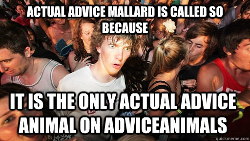 ACtual Advice mallard is called so because it is the only actual advice animal on AdviceANimals - ACtual Advice mallard is called so because it is the only actual advice animal on AdviceANimals  Sudden Clarity Clarence