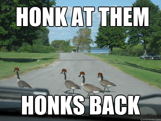 honk at them honks back  Scumbag Geese