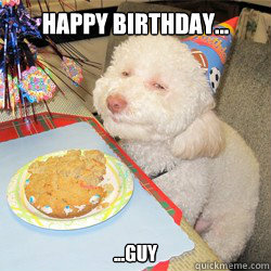 happy birthday... ...guy  birthday dog