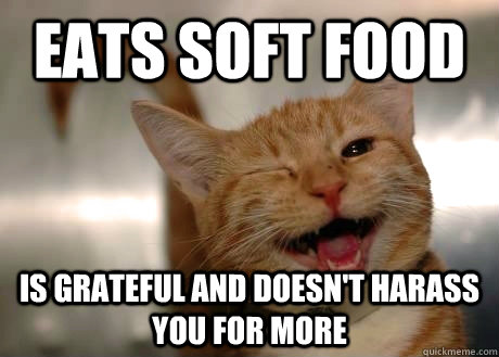 Eats soft food is grateful and doesn't harass you for more