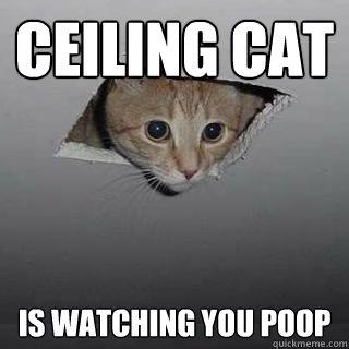 Ceiling Cat Is watching you poop - Ceiling Cat Is watching you poop  Ceiling Cat