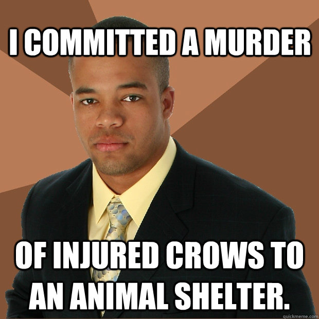 I committed a murder of injured crows to an animal shelter. - I committed a murder of injured crows to an animal shelter.  Successful Black Man