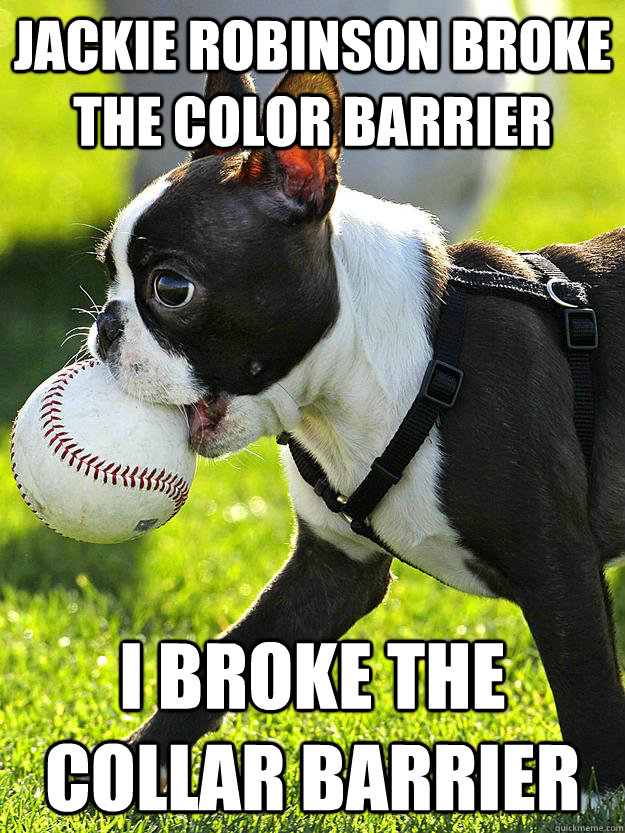 JACKIE ROBINSON BROKE THE COLOR BARRIER I BROKE THE COLLAR BARRIER - JACKIE ROBINSON BROKE THE COLOR BARRIER I BROKE THE COLLAR BARRIER  Baseball Dog