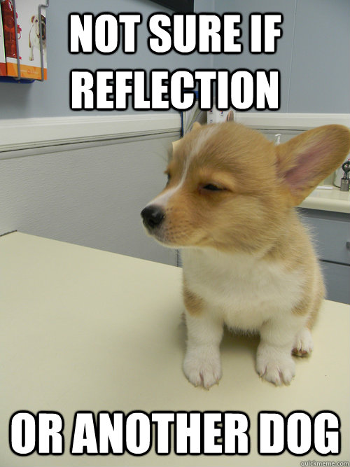 not sure if reflection or another dog