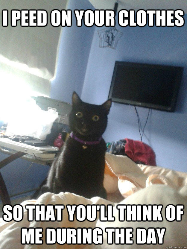 I peed on your clothes So that you'll think of me during the day  overly attached cat