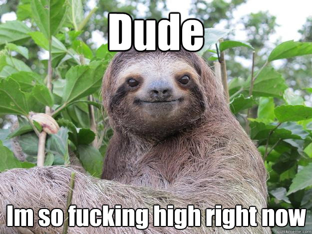 Dude Im so fucking high right now - Dude Im so fucking high right now  Stoned Sloth