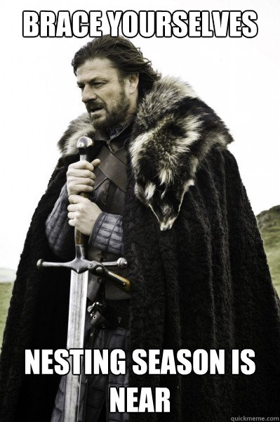 Brace yourselves Nesting Season is Near - Brace yourselves Nesting Season is Near  Brace Steve