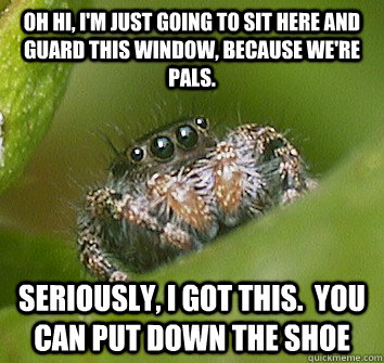 Misunderstood spider memes quickmeme for Window you can sit in