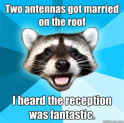 Two antennas got married on the roof I heard the reception was fantastic.  - Two antennas got married on the roof I heard the reception was fantastic.   Lame Pun Coon
