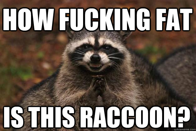 how fucking fat is this raccoon? - how fucking fat is this raccoon?  Evil Plotting Raccoon