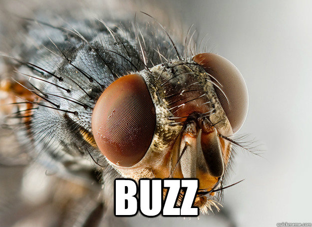 buzz -  buzz  Scumbag Fly
