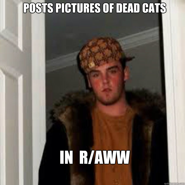 Posts pictures of dead cats In  R/AWW