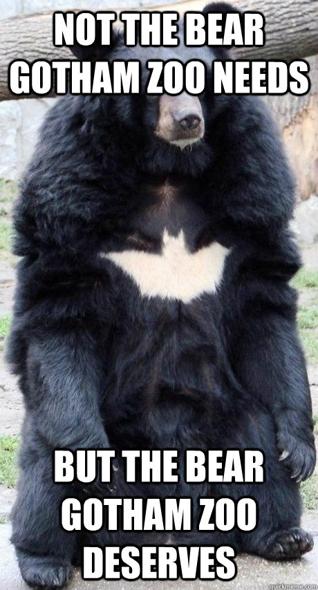 Not the bear gotham zoo needs but the bear gotham zoo deserves - Not the bear gotham zoo needs but the bear gotham zoo deserves  Bat Bear
