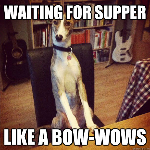 Waiting for supper Like a bow-wows - Waiting for supper Like a bow-wows  Dinner Dawg