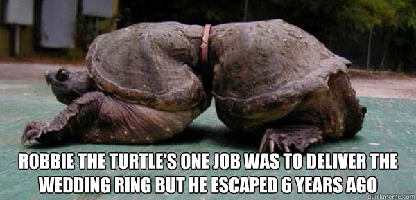 Robbie The Turtle S One Job Was To Deliver The Wedding Ring But He
