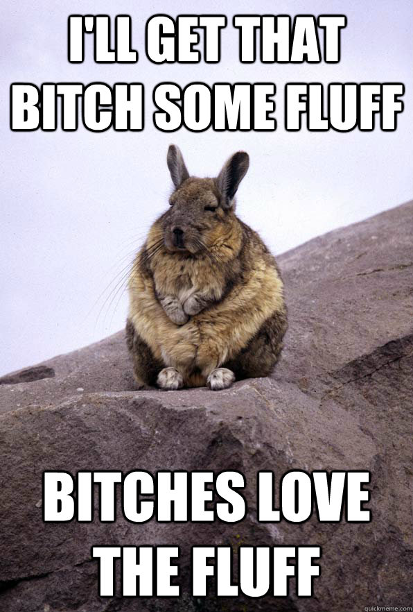 i'll get that bitch some fluff bitches love the fluff  Wise Wondering Viscacha