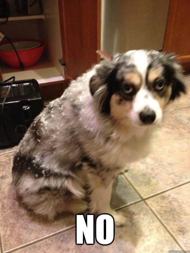 NO  Grumpy Dog