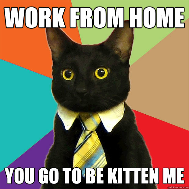 work from home you go to be kitten me - work from home you go to be kitten me  Business Cat