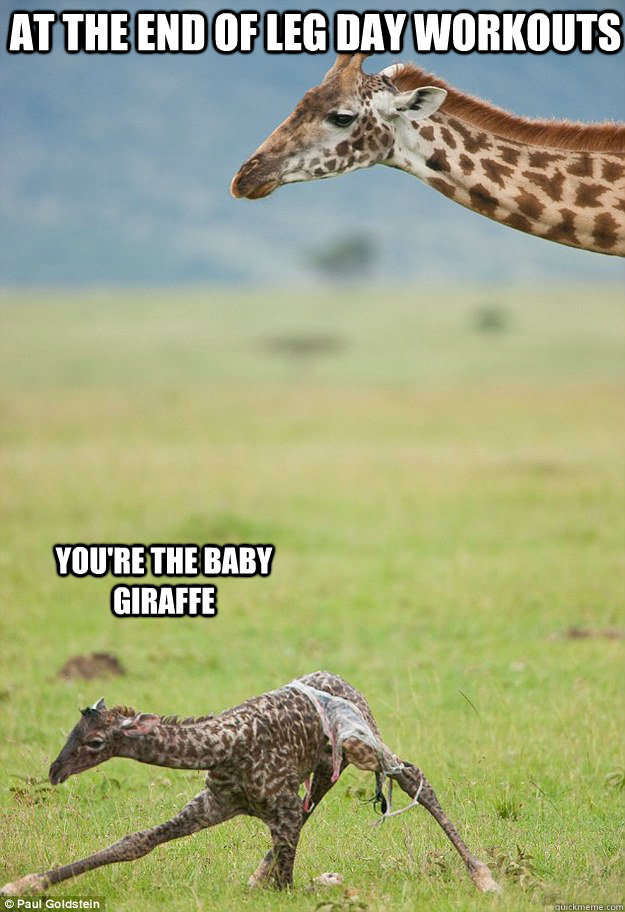 Giraffe meme coffee - photo#15