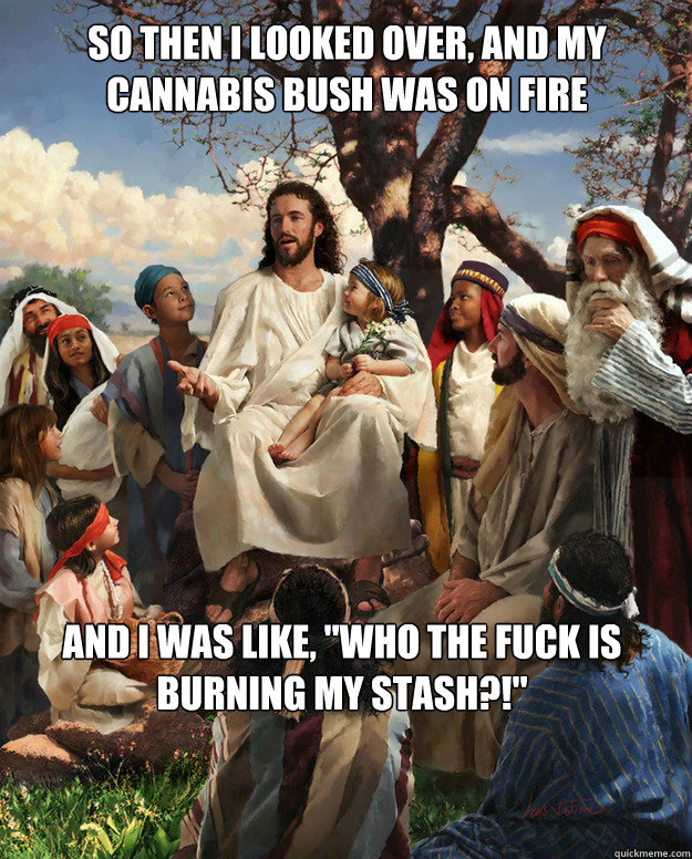So then I looked over, and my cannabis bush was on fire And I was like,