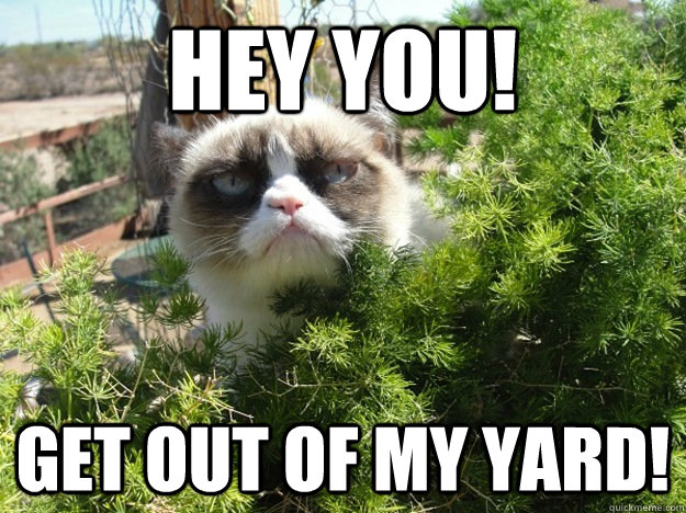 HEY YOU! GET OUT OF MY YARD! - HEY YOU! GET OUT OF MY YARD!  Tard the Grumpy Cat