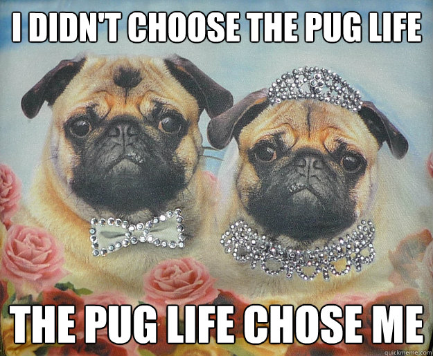 I didn't choose the pug life The Pug life chose me - I didn't choose the pug life The Pug life chose me  Pug Life