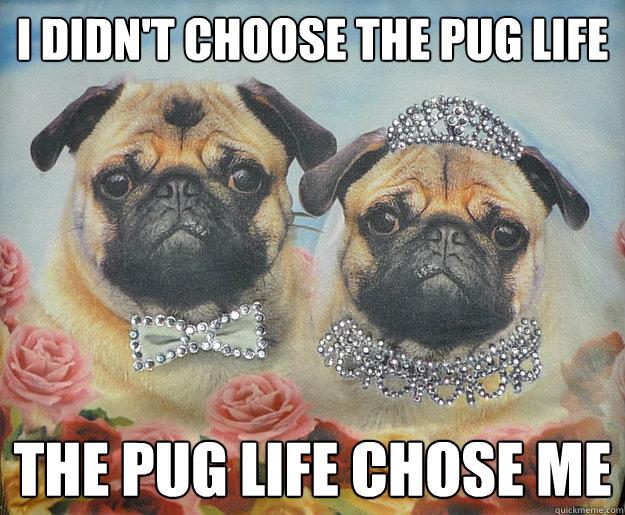 I didn't choose the pug life The Pug life chose me - I didn't choose the pug life The Pug life chose me  Pug Life
