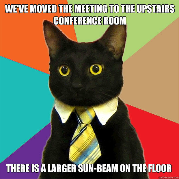 We've moved The meeting to the upstairs conference room there is a larger sun-beam on the floor - We've moved The meeting to the upstairs conference room there is a larger sun-beam on the floor  Business Cat