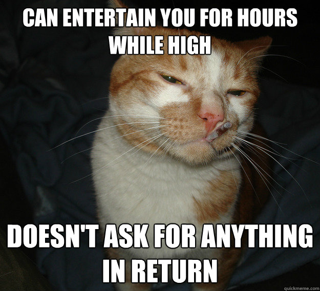 Can entertain you for hours while high doesn't ask for anything in return - Can entertain you for hours while high doesn't ask for anything in return  Cool Cat Craig