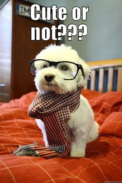 Eu mereço uma curtida?? - CUTE OR NOT???  Hipster Dog
