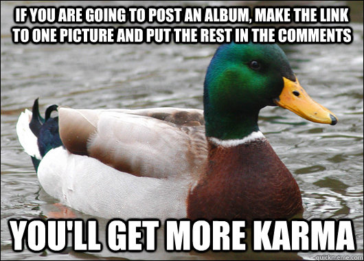 If you are going to post an album, make the link to one picture and put the rest in the comments You'll get more karma - If you are going to post an album, make the link to one picture and put the rest in the comments You'll get more karma  Actual Advice Mallard