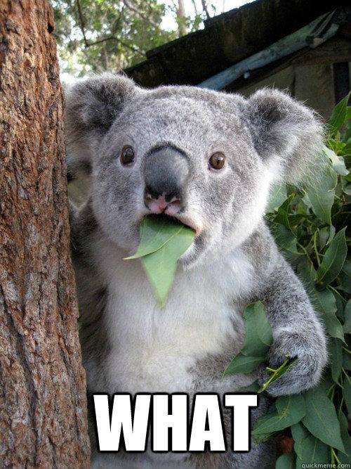 WHAT -  WHAT  koala bear