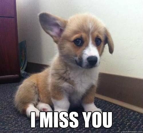 i miss you husky - photo #33
