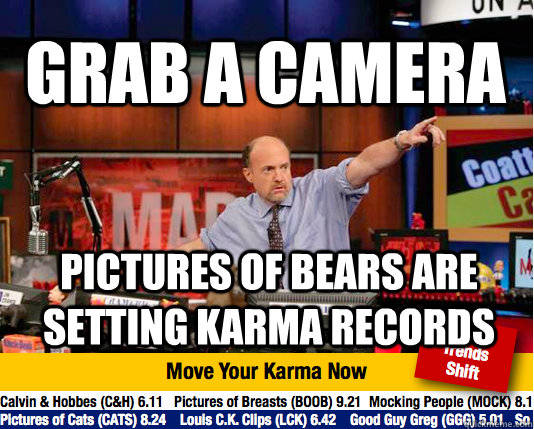 Grab A Camera Pictures of bears are setting karma records  Mad Karma with Jim Cramer