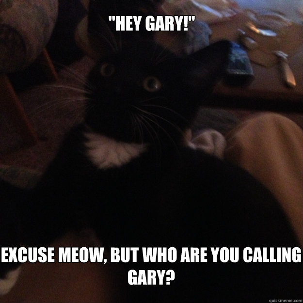 Excuse meow, but who are you calling Gary?