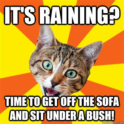 it's raining? time to get off the sofa and sit under a bush! - it's raining? time to get off the sofa and sit under a bush!  Bad Advice Cat