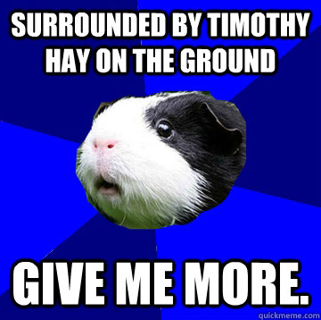 Surrounded by timothy hay on the ground GIVE ME MORE.