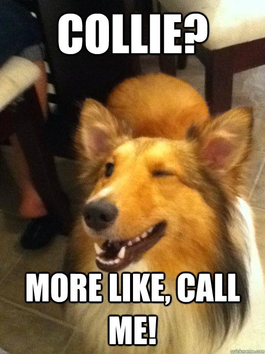 Collie? More like, Call me!