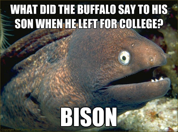 What did the buffalo say to his son when he left for college? bison - What did the buffalo say to his son when he left for college? bison  Bad Joke Eel