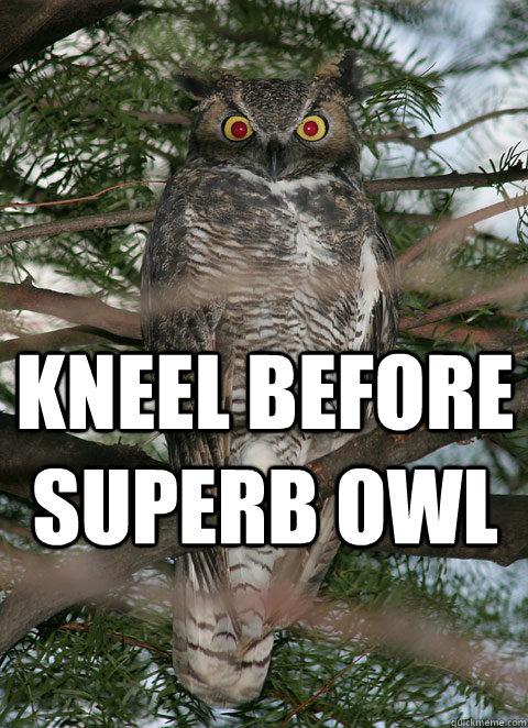 kneel before superb owl  Superb Owl