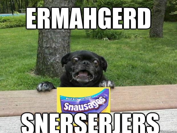 ERmahgerd snerserjers - ERmahgerd snerserjers  Berks Dog