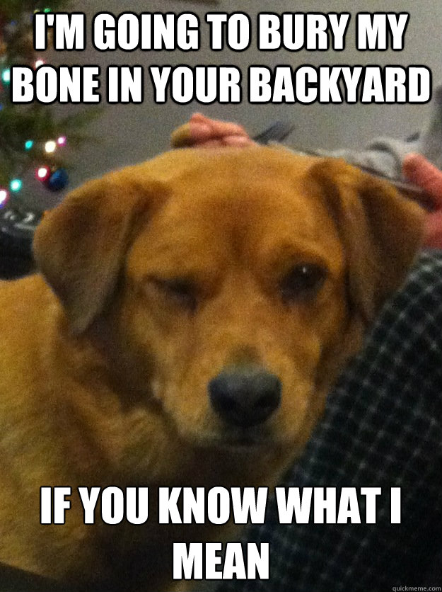 I'm going to bury my bone in your backyard If you know what I mean - I'm going to bury my bone in your backyard If you know what I mean  Innuendo dog