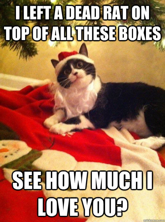 Overly Attached Christmas Cat memes | quickmeme
