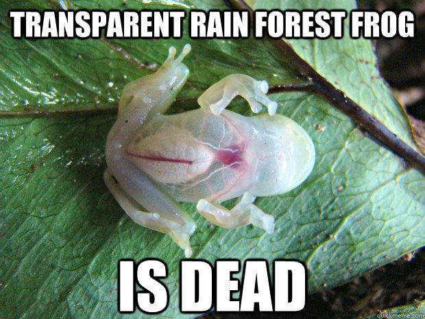 TRANSPARENT rain Forest FROG  IS DEAD - TRANSPARENT rain Forest FROG  IS DEAD  transparent