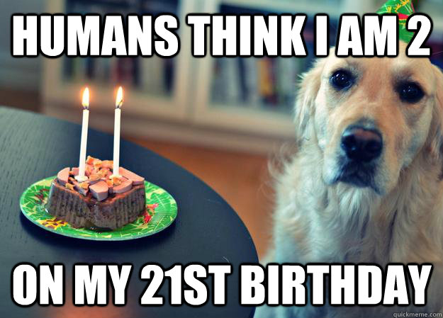 Humans think I am 2 on my 21st birthday - Humans think I am 2 on my 21st birthday  Sad Birthday Dog