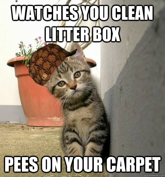 watches you clean litter box pees on your carpet