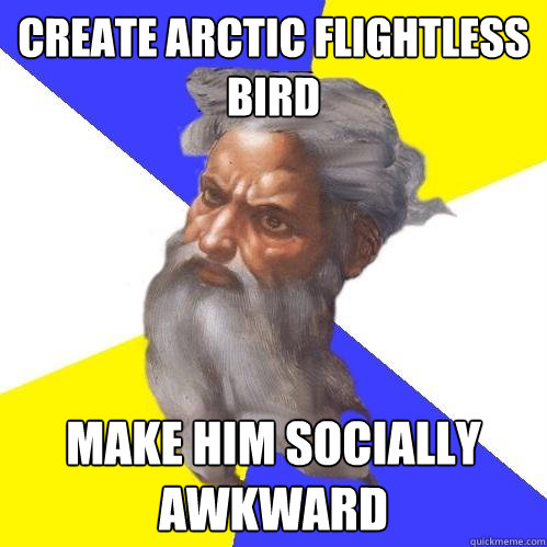 Create arctic flightless bird make him socially awkward - Create arctic flightless bird make him socially awkward  Advice God