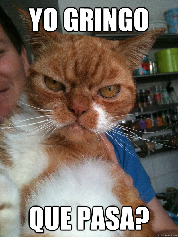 YO GRINGO QUE PASA? - YO GRINGO QUE PASA?  Gringo Cat